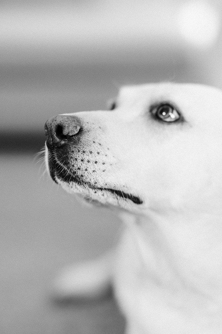 Dog Photography, Family Photography, Fotografía Animales, Fotografía Perros, Jordi Calvache, Santa María del Camí