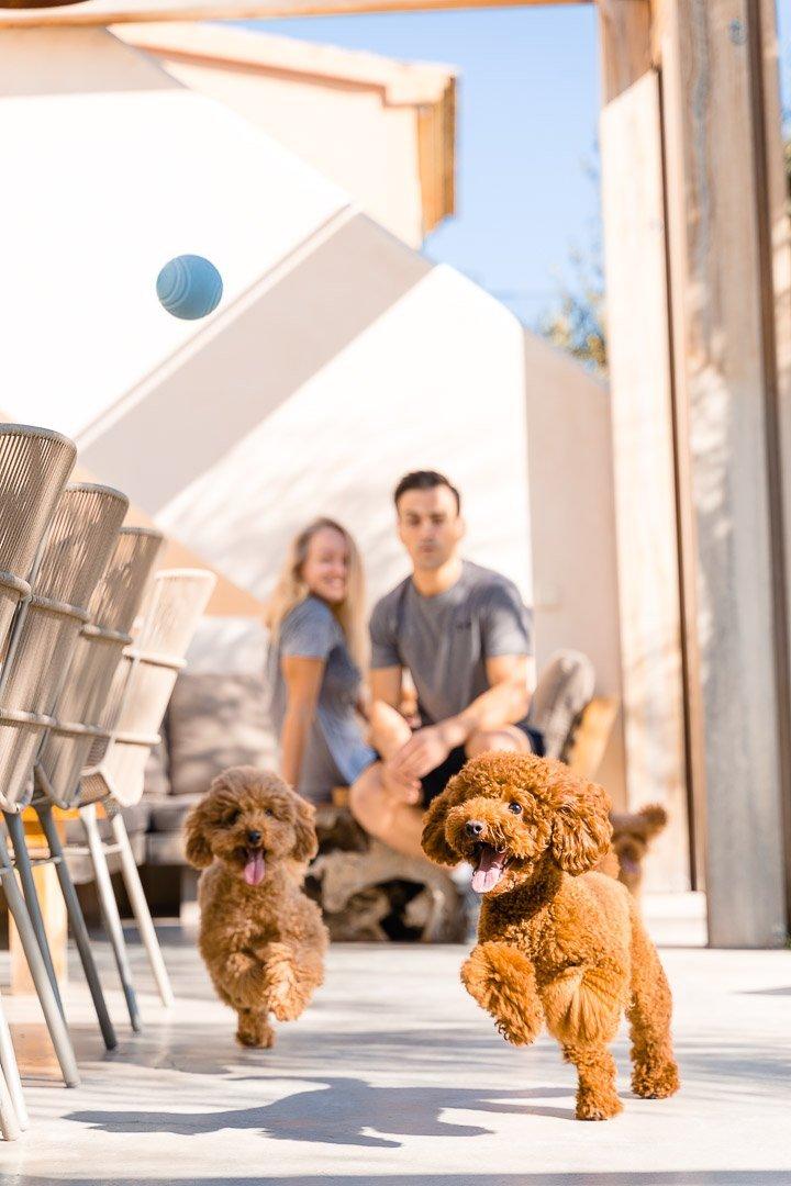 Alzina Living, Dog Photography, Fotografía Animales, Fotografía Perros, Lisa & Adrian